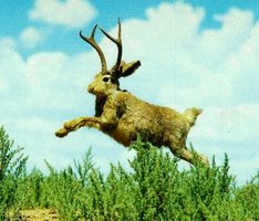 Episode 69: The Majestic Jackalope